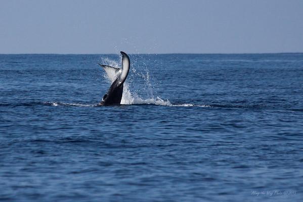 Whale 6975