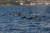 Whale 8219