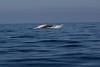 Whale 6842