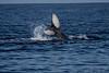 Whale 7047