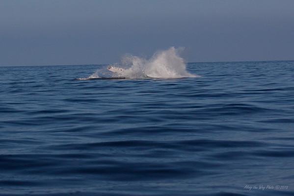 Whale 6843