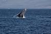 Whale 7124