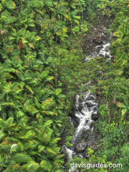 lush rainforest on the Big Island