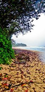 2011 Hawaii 087