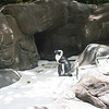 Grounds of the Hilton Hawaiian Village - Yes, that is a penguin!