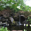 Grounds of the Hilton Hawaiian Village