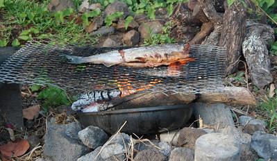 Grilled salmon...yum!