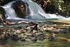 Stream and waterfall, Big Island.