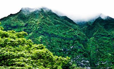 2011 Hawaii 176