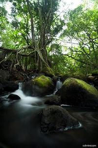 Hawaiian Stream 3119