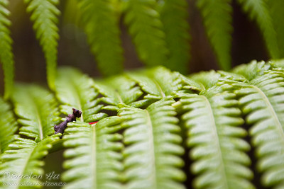 Minature Terrier on a fern.