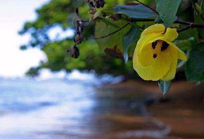 Hanalei Bay Kauai, HI