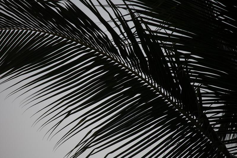 Hawaii-9768