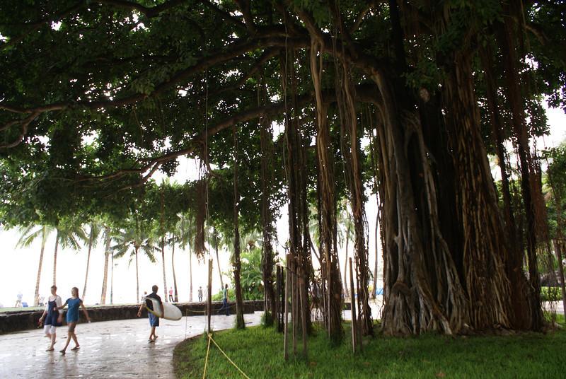Tree on Honolulu