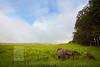 Waimea Landscape