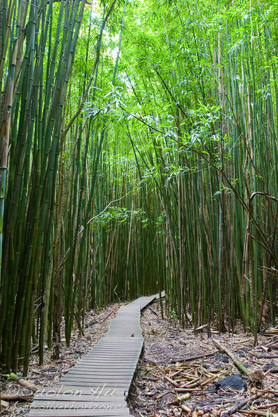 Bamboo Forest along the Pipiwai Trail near Hana, Maui