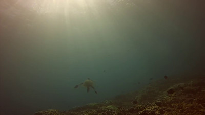 Hawaii 14'-6