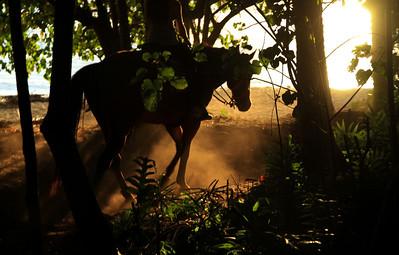 Horseback riding at Turtle Bay resort, Oahu, HI