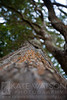 Hawaii Tree
