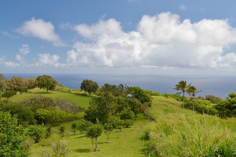 Pacific Ocean from View House,  Honaka'a