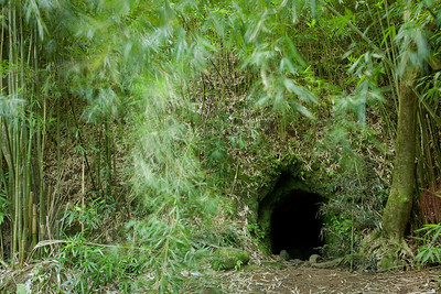 Lava tube and surrounding bamboo forest. Molten lava flows through the earth and then exits, leaving a tunnel called a lava tube.