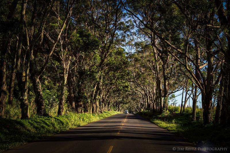 "The ""tree tunnel"" on the road to Poipu - Kauai, Hawaii..."