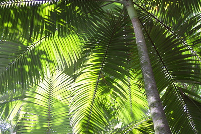 Coconut Grove, Big Island.