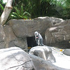 Grounds of the Hilton Hawaiian Village - Another penguin!