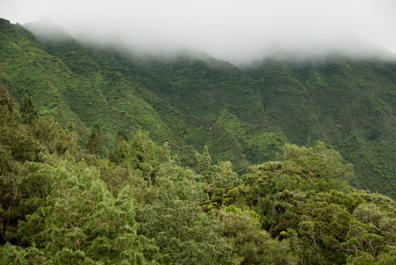 """<span id=""""title"""">Trees</span> <em>Kaneohe, Oahu</em> Close trees, far trees and misty clouds. Definitely on the windward side of the island."""