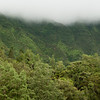 "<span id=""title"">Trees</span> <em>Kaneohe, Oahu</em> Close trees, far trees and misty clouds. Definitely on the windward side of the island."
