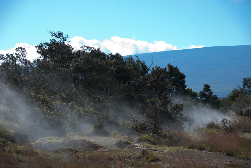 """<span id=""""title"""">Steam Vent 1</span> <em>Hawaii Volcanoes National Park</em> Here you can see why it's called the Steaming Bluff. The dark blue thing in the background is Mauna Loa, the world's largest active volcano.  Mauna Loa was interesting because you never saw the whole thing - it's just too massive. The views you did get were misleading because the mountain is relatively featureless, so it's really hard to get a sense of scale."""