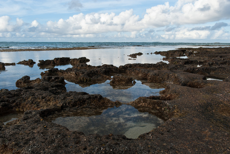"""<span id=""""title"""">Pools</span> <em>North Shore, Oahu</em> Neat tide pools along the North Shore. All sorts of little animals and plants were waiting to be discovered..."""