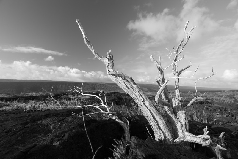 "<span id=""title"">Tree</span> <em>Hawaii Volcanoes National Park</em> Not so much alive anymore. The tree was growing out of a lava flow, so that's not what killed it. There are so few trees in this area for many miles, it's rather striking given the abundance of them in other places."
