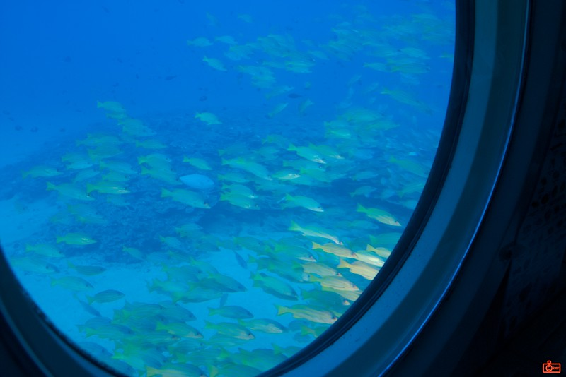 Looking out the viewport of the submarine Atlantis showing a school of fish with a dull coloured reef on the ocean floor.