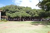 This is apparently the largest banyan tree in the US, planted in 1873. This is all one tree.