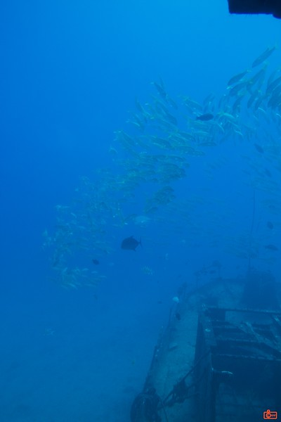 Fish and an artificial reef as seen from the submarine Atlantis.