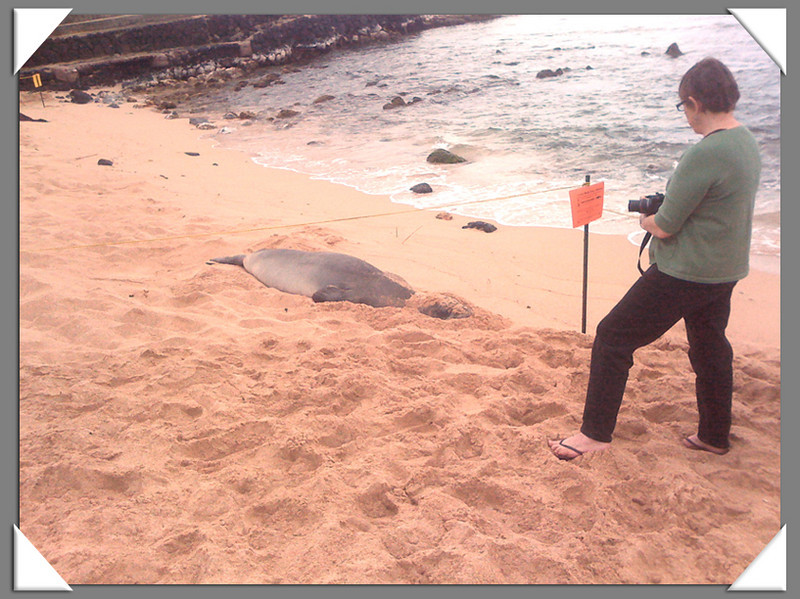 Jacki taking the monk seal's photo at a safe distance.