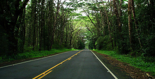 Tree-lined Highway