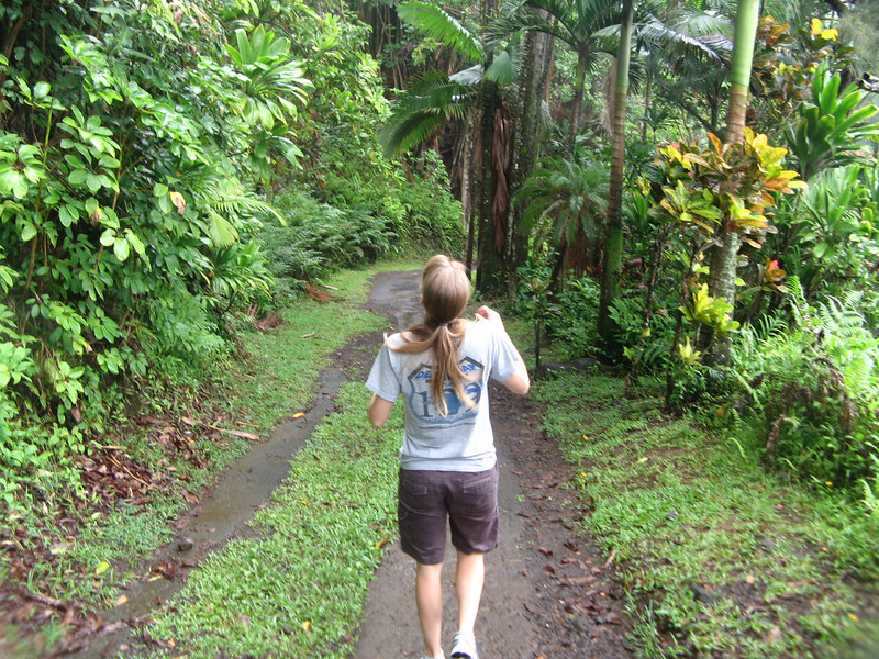 We're on the east coast of Hawaii, with lush rainforests