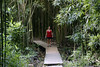 Cindy on a little bridge while Hiking through the Bamboo Forest on the Trail to Wailua Falls, Hana, Maui