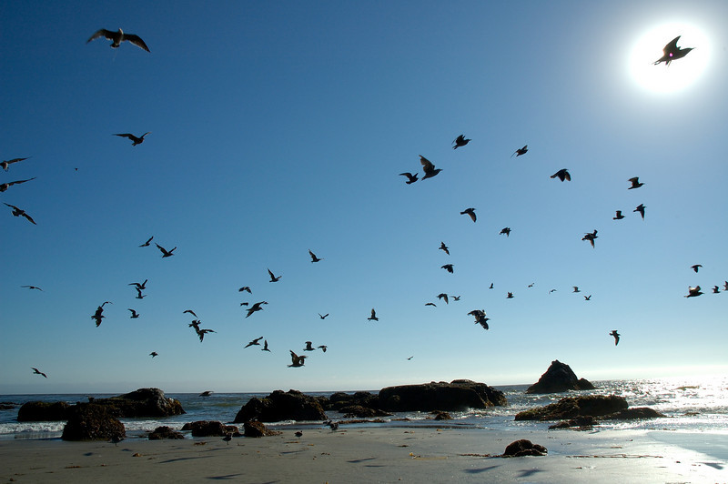 Free as a bird: Seagulls on the beach, somewhere between San Simeon and Morro Bay.