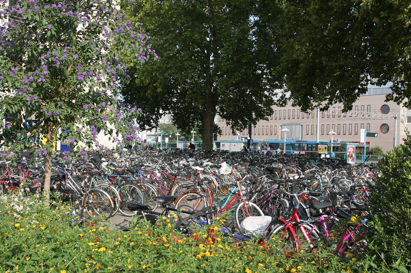 Bicycle parking at the train station in Heidelberg