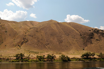 Lone tree on a hill, Hells Canyon, July, 2009