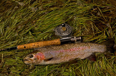 Fish and fly rod shot.