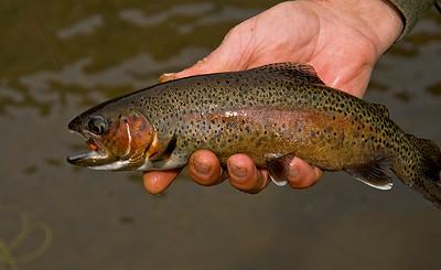 Beautiful fish in hand.