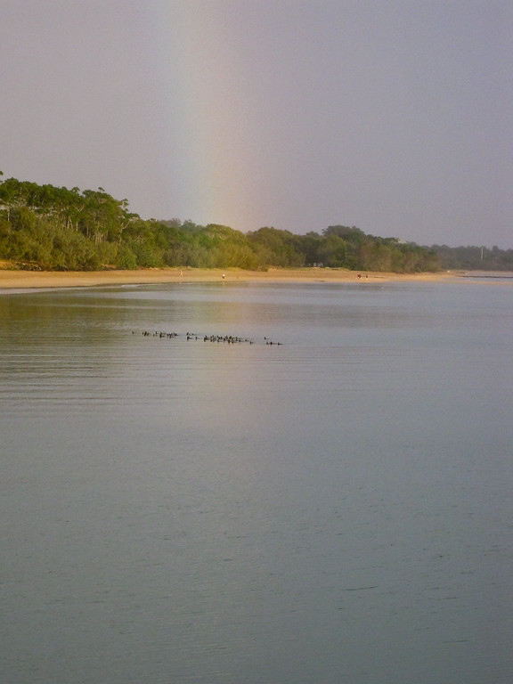 Point & Shoot / Pocket Camera photos taken at Pialba Beach, Hervey Bay, Queensland; June 2010.  - Seabirds finding their breakfast.
