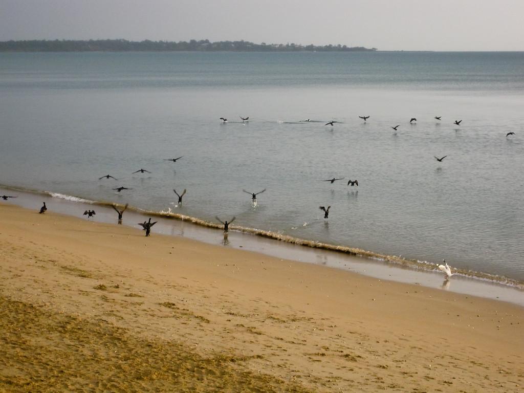 Point & Shoot / Pocket Camera photos - Seabirds finding their breakfast - taken at Pialba Beach, Hervey Bay, Queensland; June 2010.