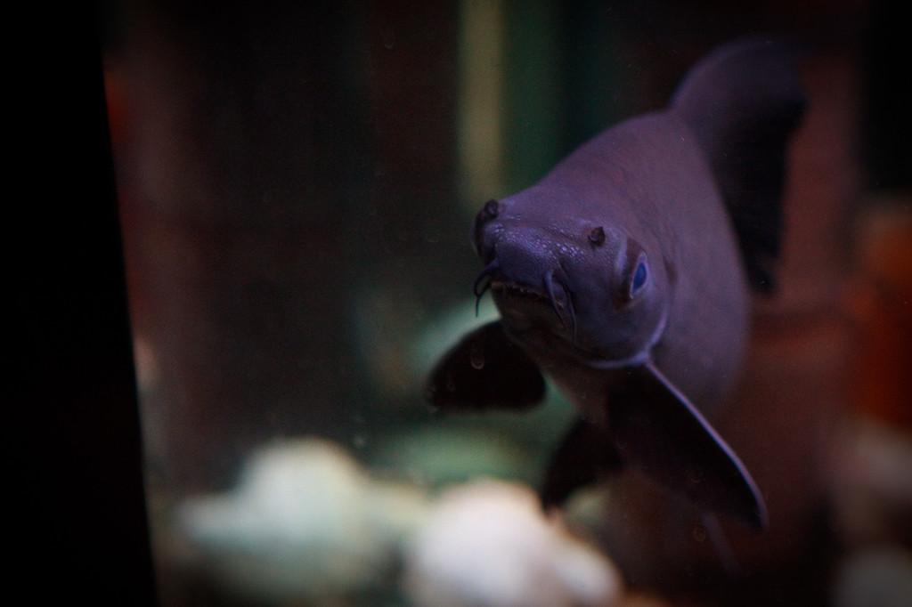 Aquarium fish at Pier Restaurant, Urangan, Hervey Bay, Queensland, June 2010.