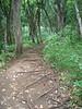 River trail, Wailua river, Kaua`i