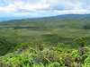 Kanaele Swamp, west of Mt. Kahili, Kaua`i. Seen from the summit of Mt. Kahili.